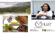 Destacan en conferencia la importancia de los pinos piñoneros de Miquihuana